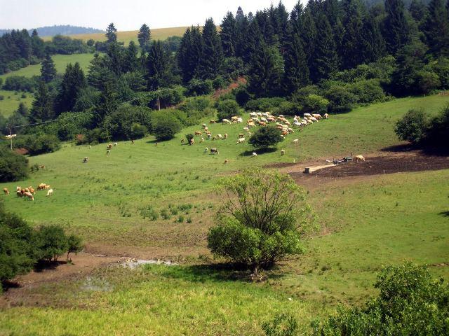 34 pastviny patriace k obci Sklenne