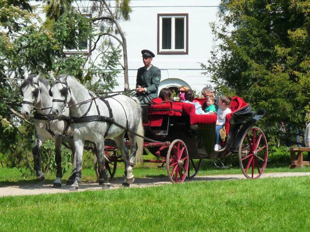 Koníky a koč s cestujúcimi